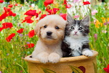 Puppy & kitty