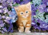 Kitten-in-garden2