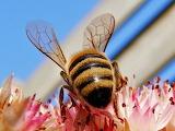 Wasp-