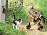 duck-inspector