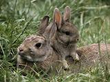Rabbit & Baby