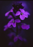 Flowers tumblr simplu-beautiful