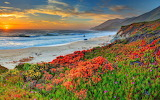 Beach-sea-coast-flowers-sunset-landscape