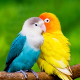 Colorful Couple...