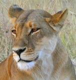 Hwange, Zimbabwe