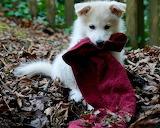 Goodbye Red Towel!