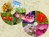 Flowers anime nature1