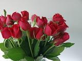 Rosas-rojas-9