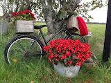 Bicycle-flower-planter-6