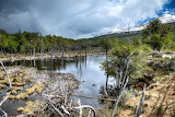 Argentinië Tierra-del-Fuego Beverdam-in-Nationaal-Park