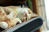 Das a cute kitty