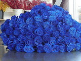 Blue roses galore