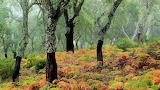 Cork Oaks, Los Alcornocales Natural Park