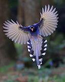 Large bird in flight