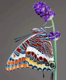 ^ Butterflies are symbols of endurance, change, hope and life