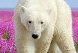 Polar-bear-in-the-flowers-8