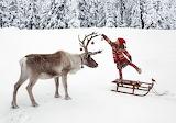 Reindeer...........................................x