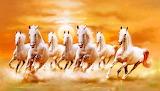 🐎Running Stallions...