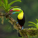 ☺♥ Rainy day in the jungle...