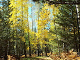 Fall Colors Flagstaff
