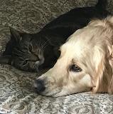 Whatcha Thinking, Doggy?