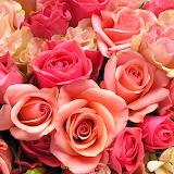 Wonderful Roses...