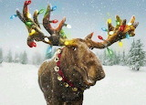 Moose with Lights