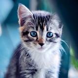 Charming Kitten...