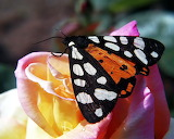 Insects @ freeimages...