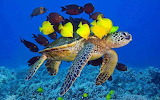 Turtle, fish, seabed, underwater world