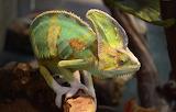 Reptile-ExoticSp12345678