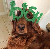 The Real Irish