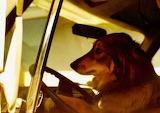 Tuffy at the wheel