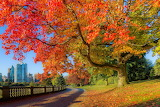 Autumn, park, trees, colorful foliage, path, landscape