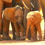 Ithumba, Kenya
