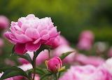 ☺ Pink...