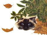 ^ Cat ~ Lowell Herrero
