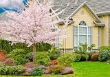 Cottage-flowered tree-garden
