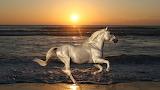 landschap met paard