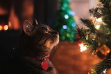 Cat and the Christmas tree