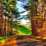 ~Fall Road~