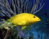 Peix - Fish