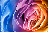 Technicolor Rose