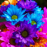 Colorful Flowers...