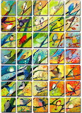 41 birds