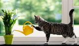 Gatito jardinero