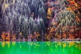 Evgeni Dinev Photography Purple Trees Green Lake