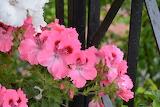 De mi jardin 718