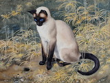"Animals tumblr dogstardreaming Cat ""Siamese Cat Sitting Amongst"