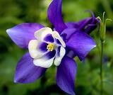 Flores901